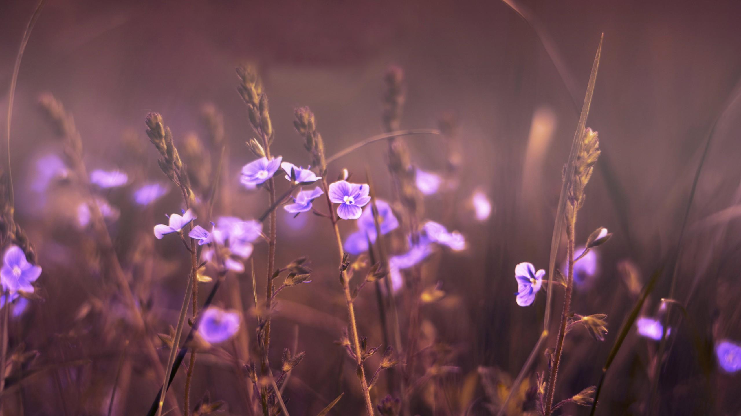 Www 3d Flower Wallpaper Com 4k Flower Wallpapers 11 Widescreen Wallpaper