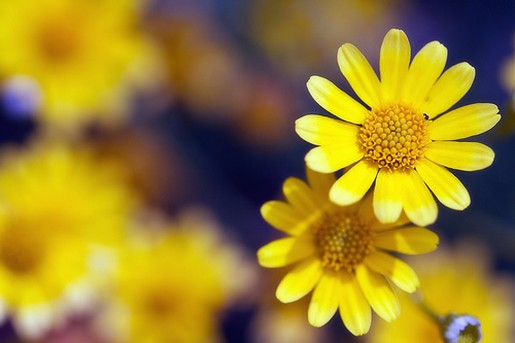 Www 3d Flower Wallpaper Com Small Yellow Flowers 34 High Resolution Wallpaper