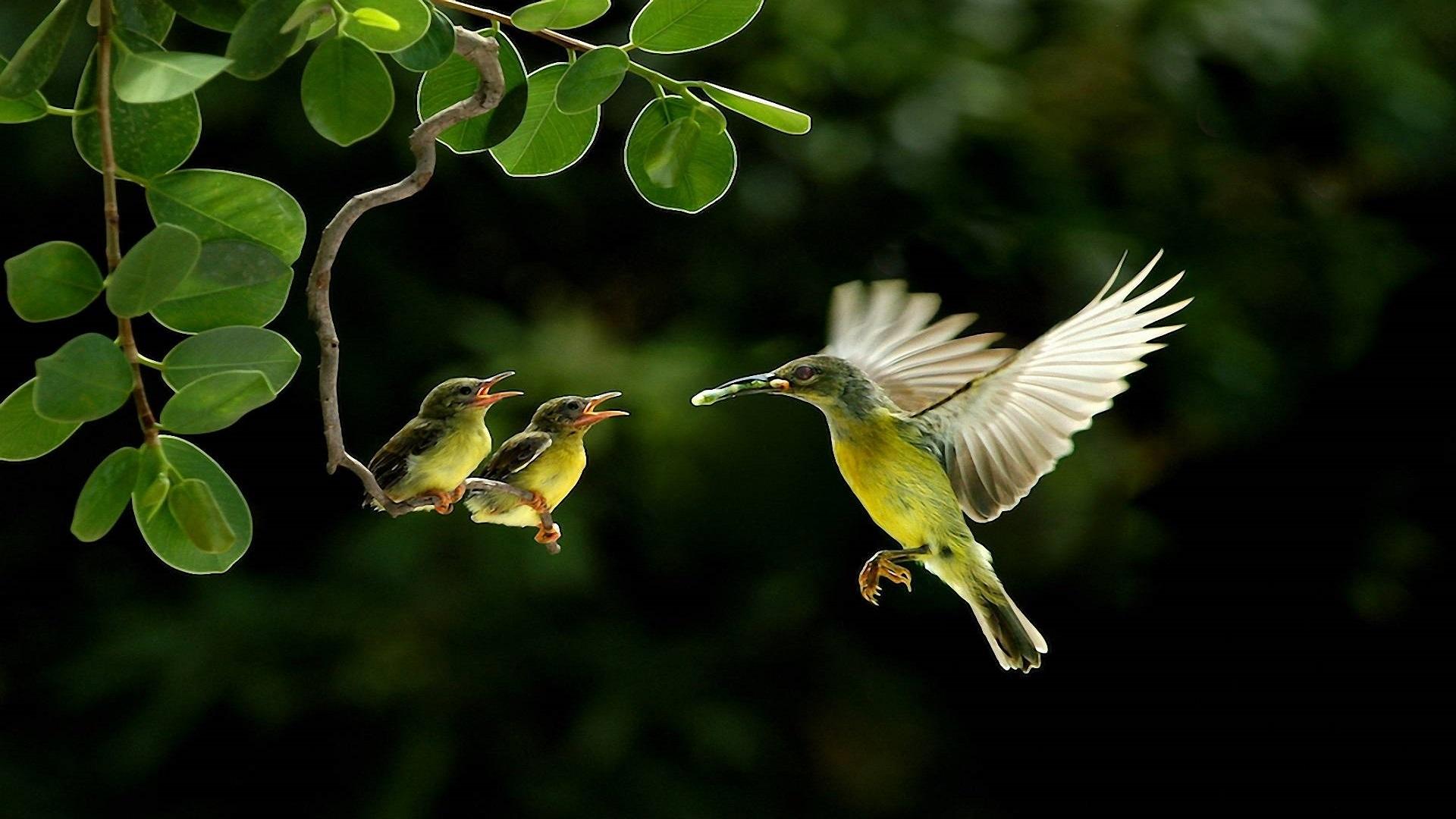 Best 3d Amazing Wallpapers Beautiful Birds Wallpapers Pictures Hd Wallpaper