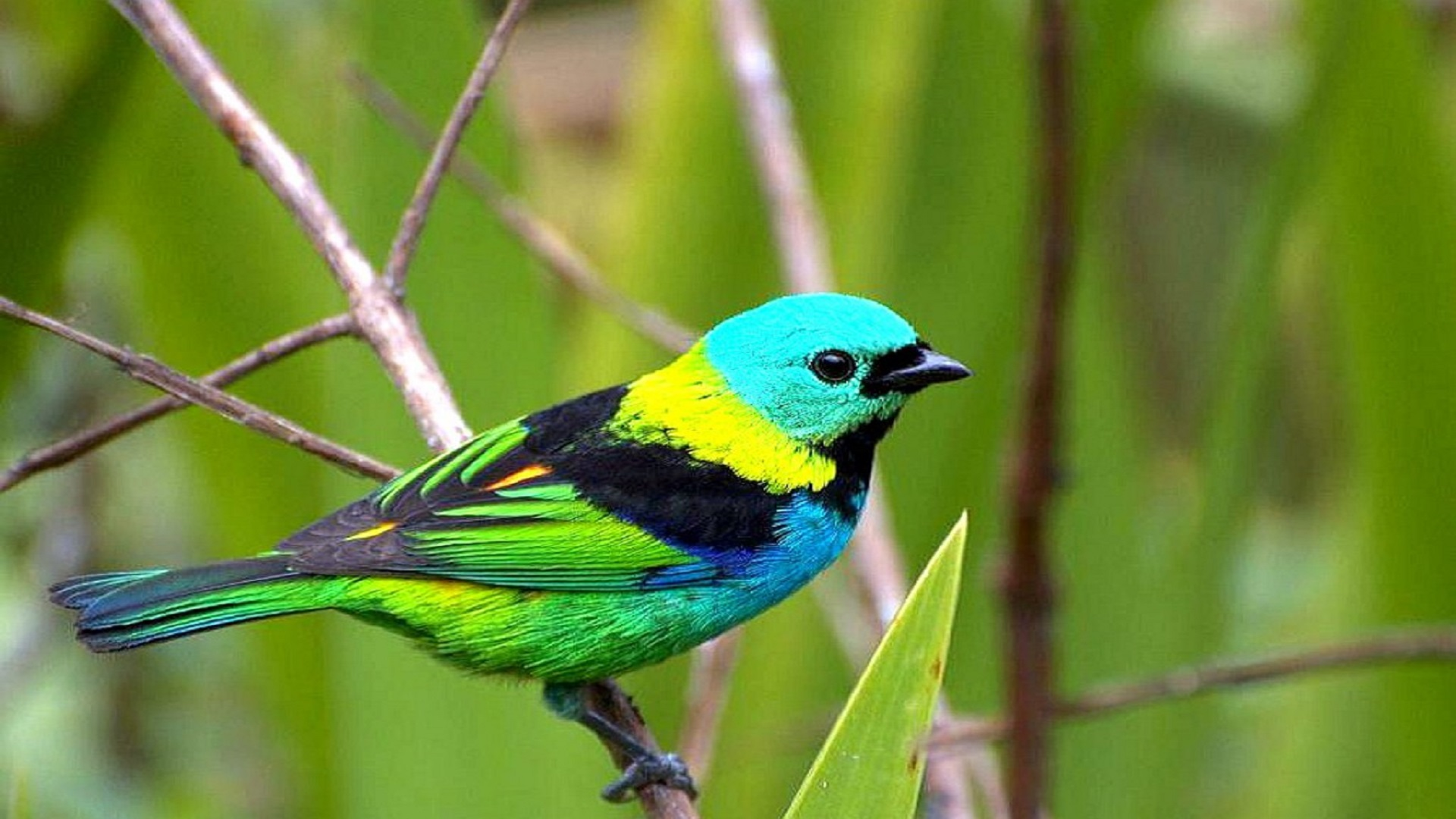 3d Photo Wallpaper Free Download Cool Colorful Birds Wallpaper Free Download Hd Wallpaper