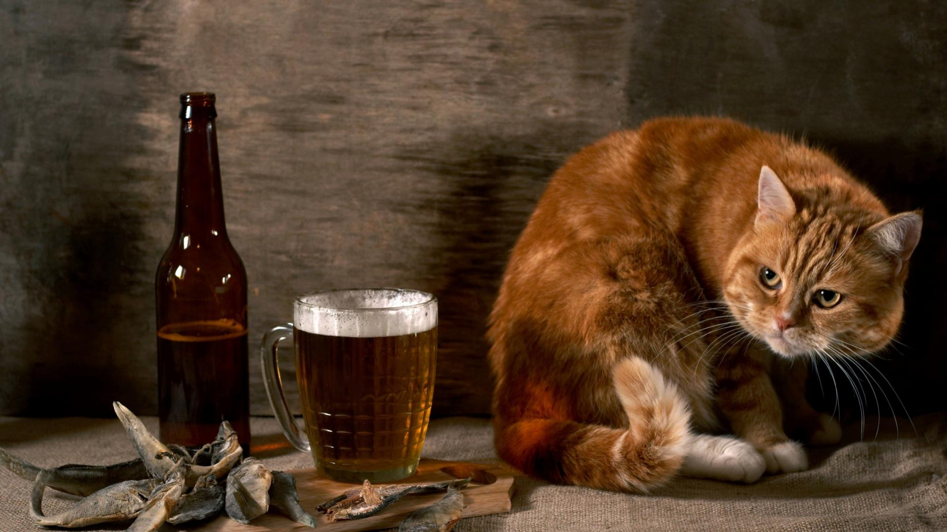 Funny Wallpapers For Desktop Hd Cat And Beer Funny Animal Wallpaper Hd Free For Desktop