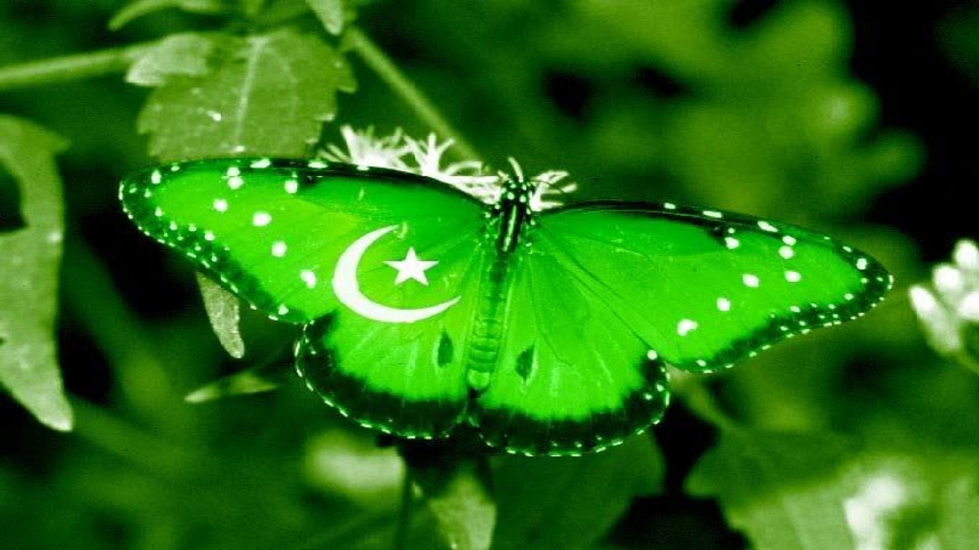 Pakistan best wallpapers hd free for you