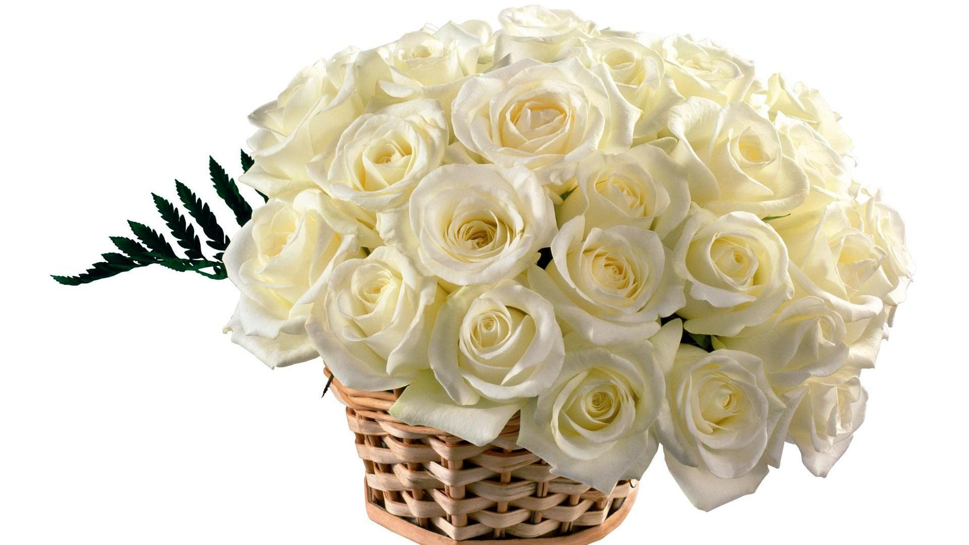 Wallpapers Free Download Hd 3d White Roses Best Hd Free Wallpapers Hd Wallpaper