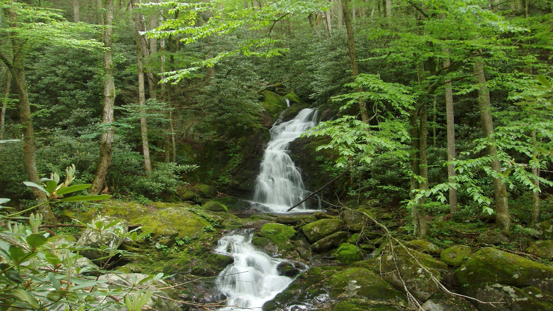 Desktop Background Wallpaper 3d Greate Smoky Mountains National Park Hd Free Wallpapers