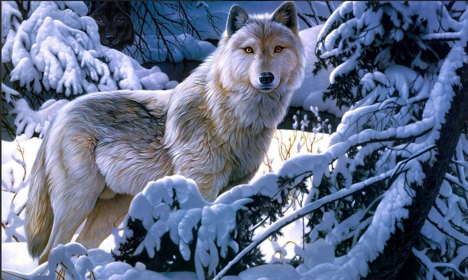 Cute Wallpapers On Computer Wolf Wallpapers Hd Free Download For Desktop Pc Collections
