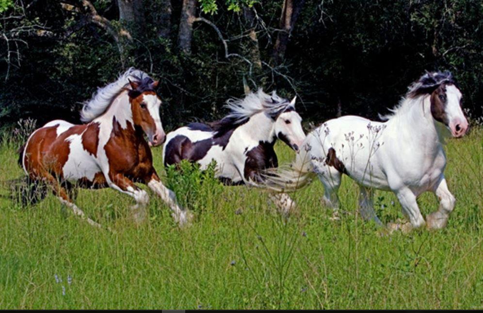 3d Geometric Shapes Wallpaper White Running Horses Hd Wallpaper Free Download