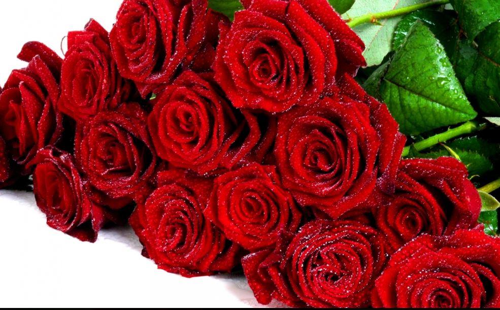 3d All Wallpaper Free Download Beautiful Rose Flower Wallpaper Free Download Hd Wallpaper