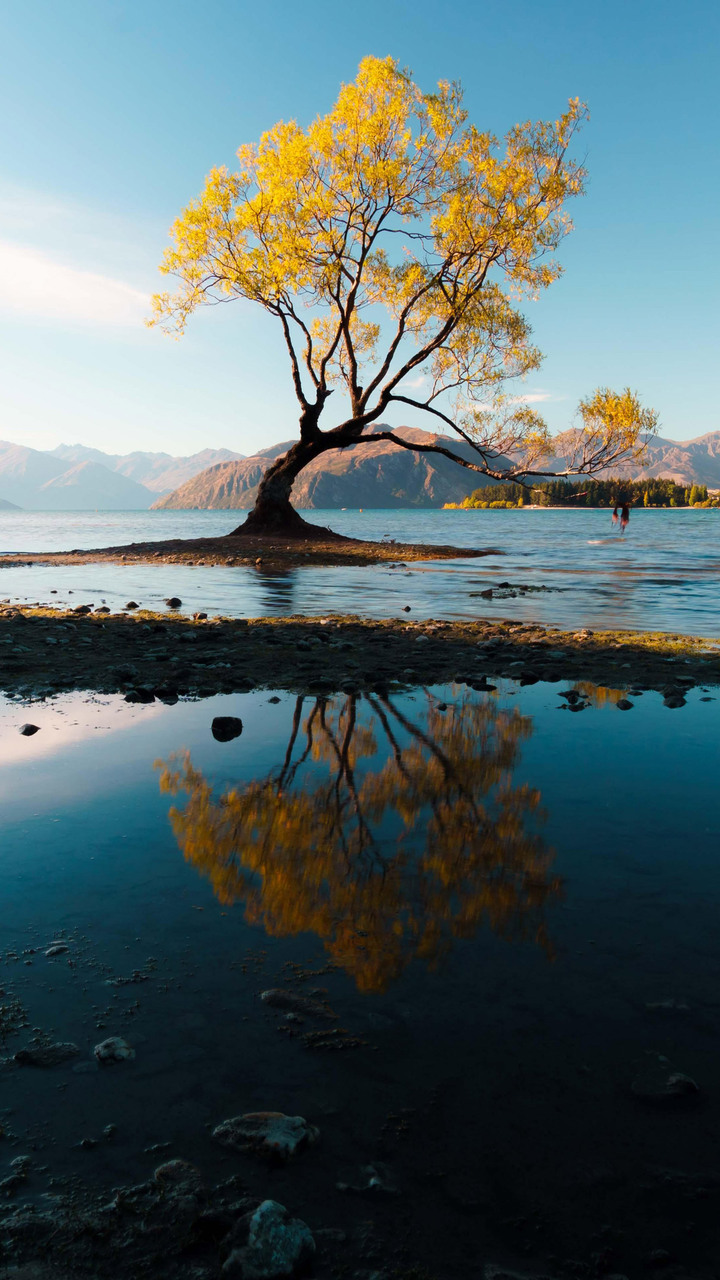 3d Hd Wallpaper For Android Mobile 720x1280 Autumn Tree 5k Moto G X Xperia Z1 Z3 Compact