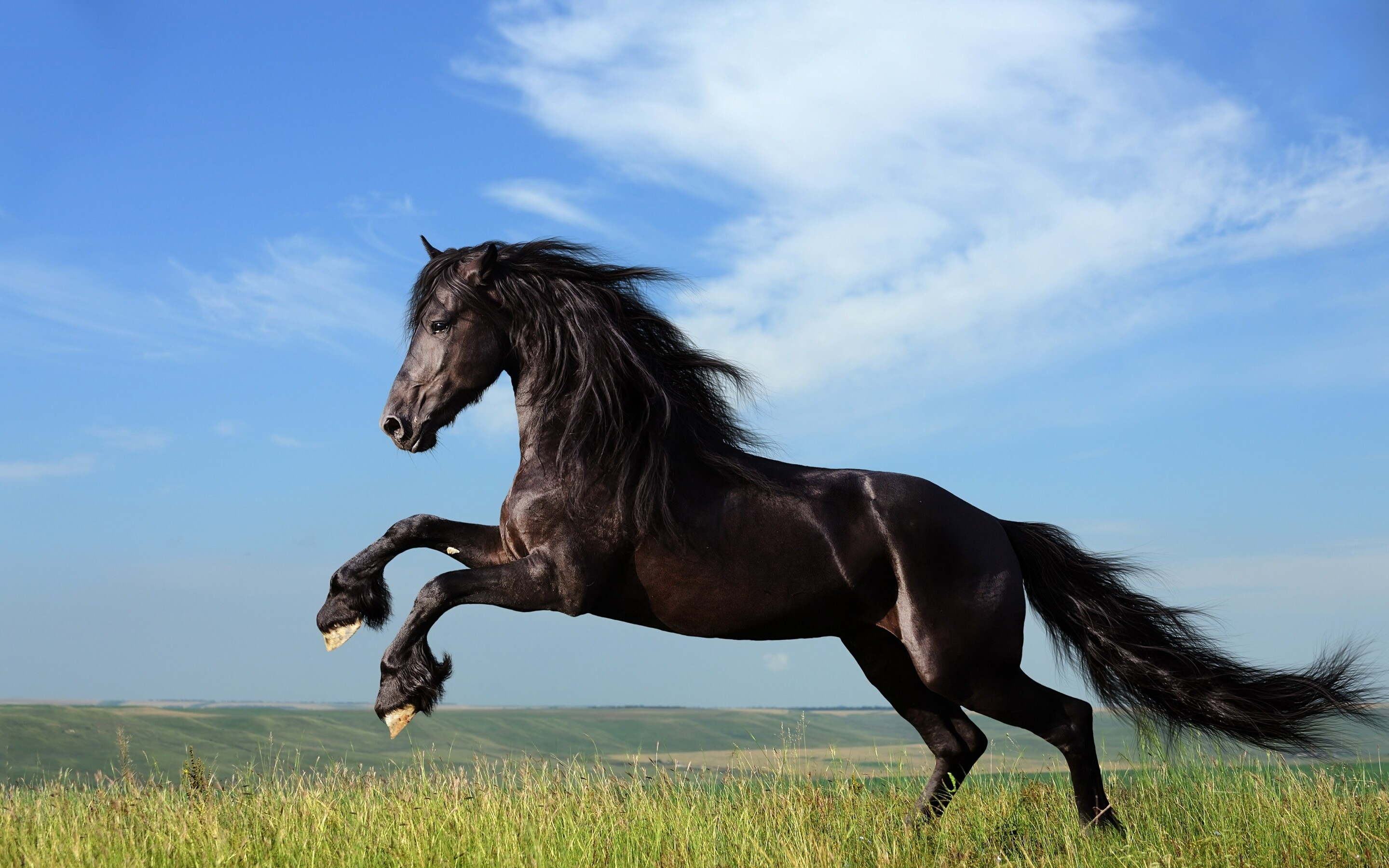 3d Animation Wallpaper For Pc Download 2880x1800 Horse Jump Macbook Pro Retina Hd 4k Wallpapers
