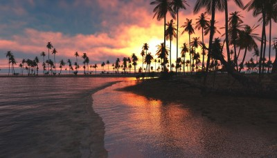 1336x768 Palm Trees Sunset Sea Laptop HD HD 4k Wallpapers, Images, Backgrounds, Photos and Pictures