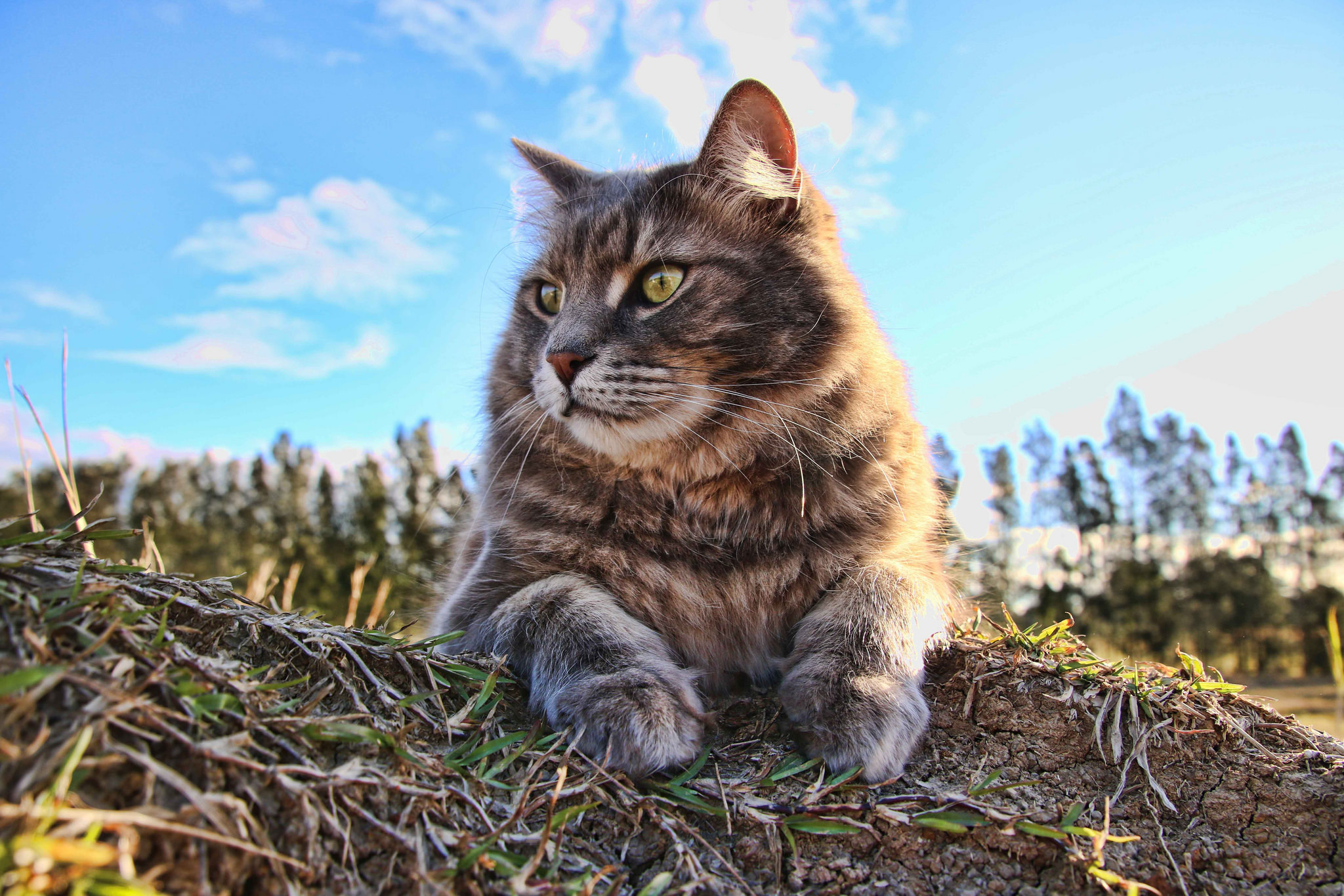 Cute Cat Hd Wallpapers For Mobile Cat 4k Hd Animals 4k Wallpapers Images Backgrounds
