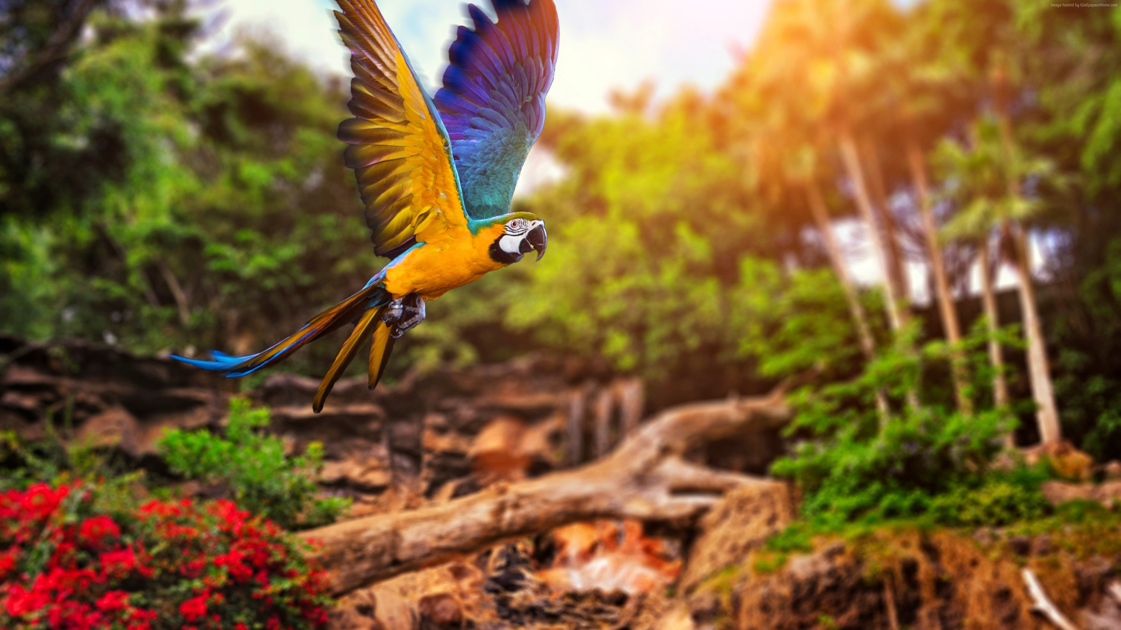 3d Wallpaper 800x1280 Colorful Parrot 4k Hd Birds 4k Wallpapers Images