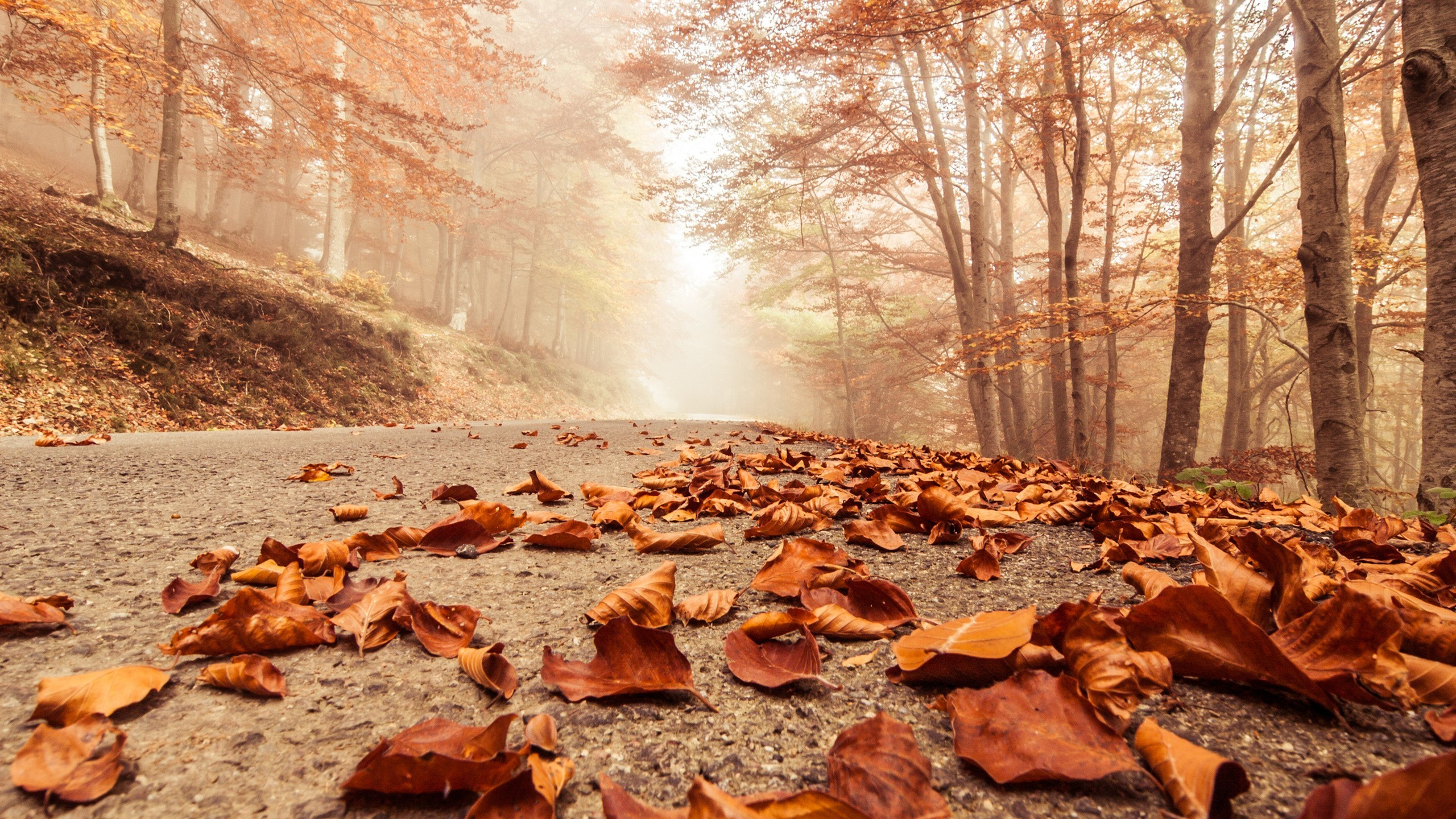 Car In Forrest Hd Wallpaper Leaves Fall On Road Hd Nature 4k Wallpapers Images