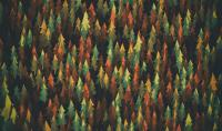 1920x1080 Material Design Forest Laptop Full HD 1080P HD