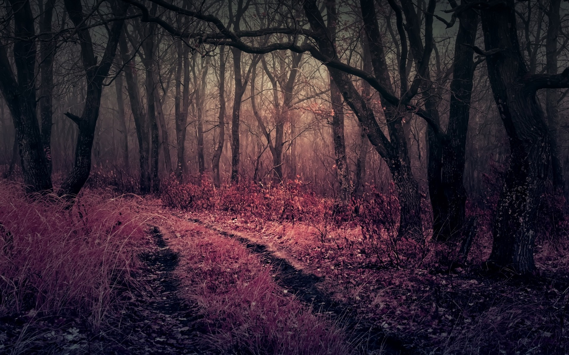 Gloomy Fall Wallpaper Purple Heaven In Forest Hd Nature 4k Wallpapers Images