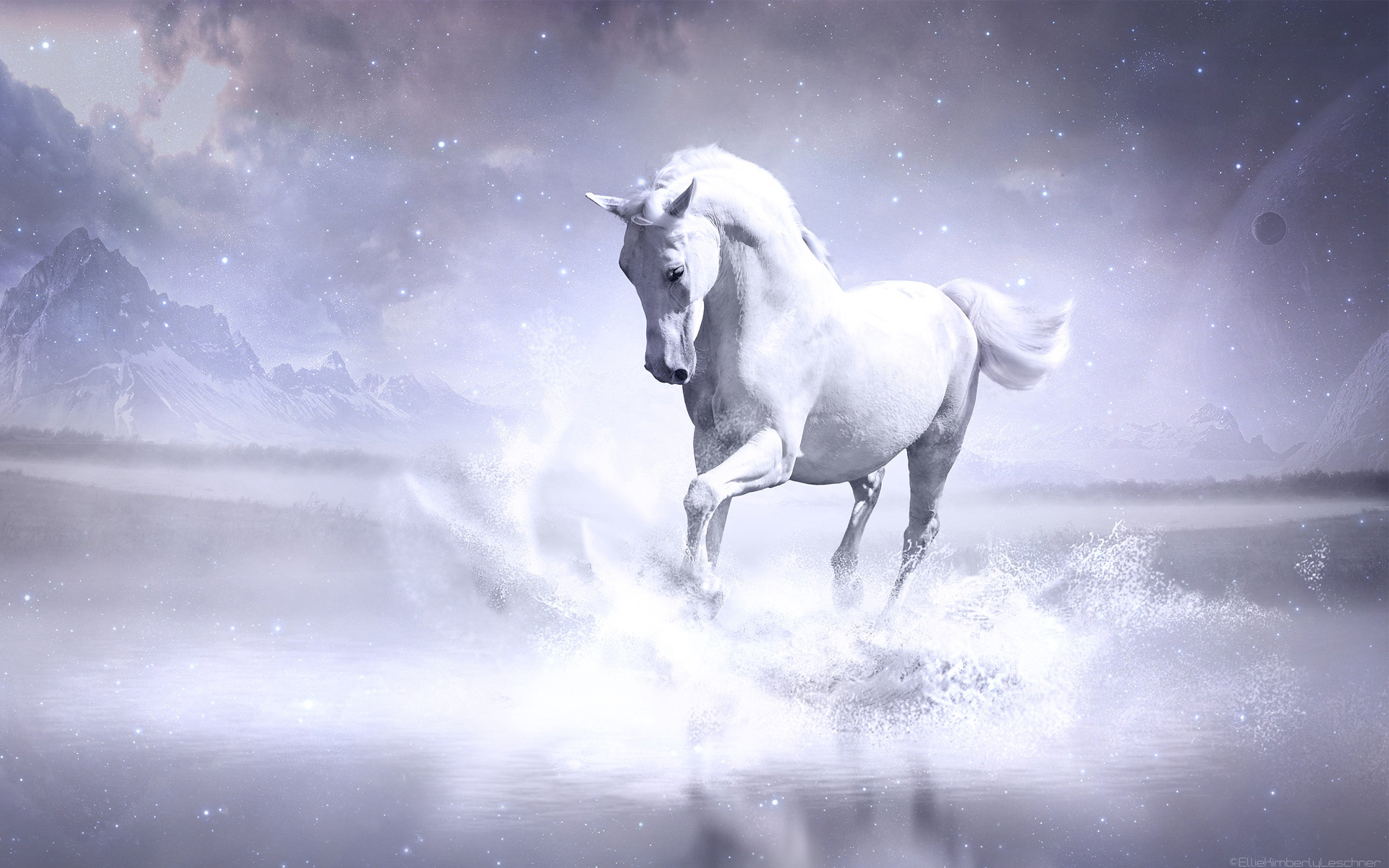 800x1280 Wallpaper Hd White Horse Hd Animals 4k Wallpapers Images