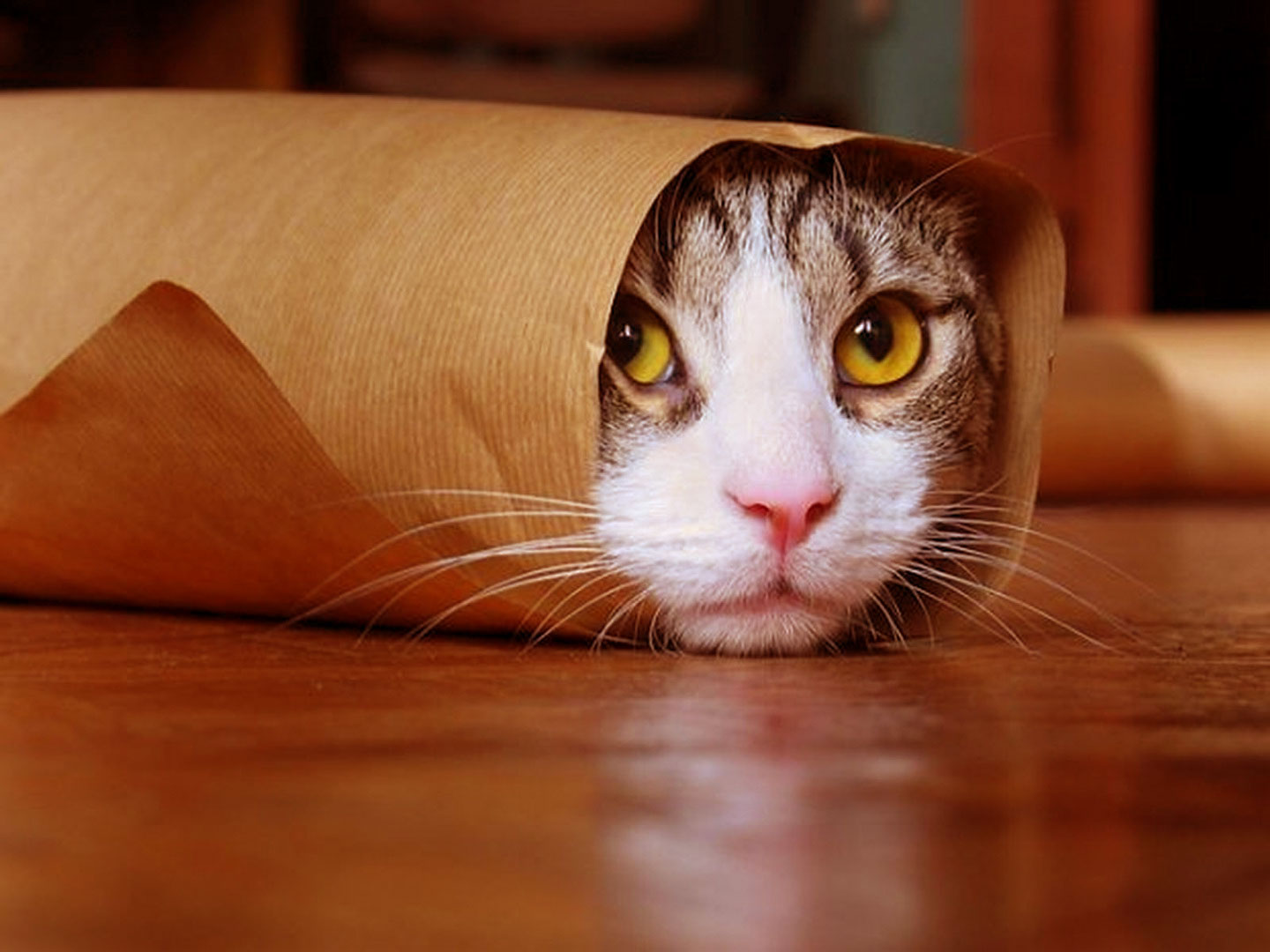 Lustige Katzen Funny Cat Wallpapers, Pictures, Images