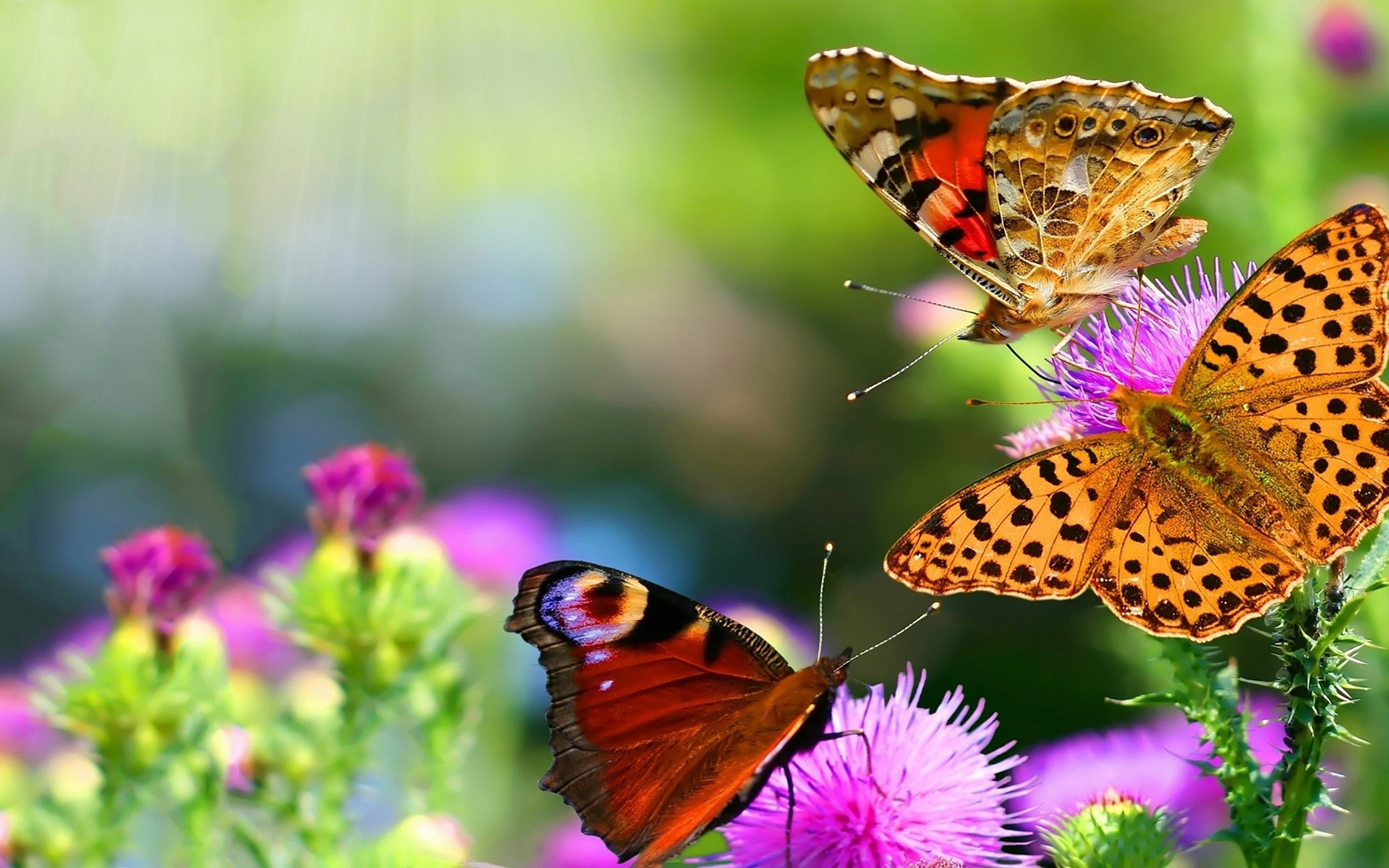 Beautiful Pictures Of Flowers And Butterflies Birds Beautiful Butterflies Wallpapers Pictures Images