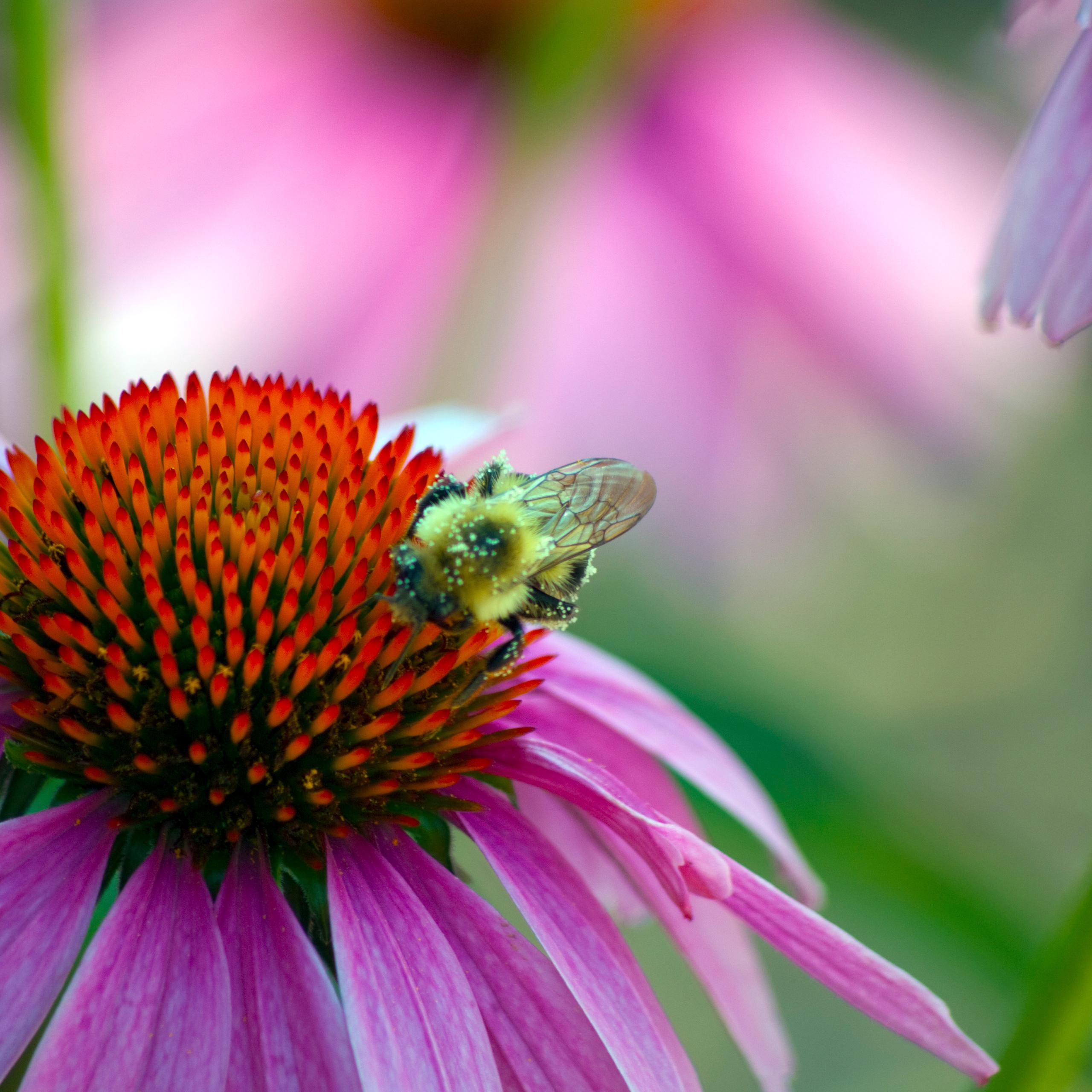 S4 Wallpaper Hd صورة زهرة مع نحلة خلفيات ورد وزهور جميلة من موقع خلفيات
