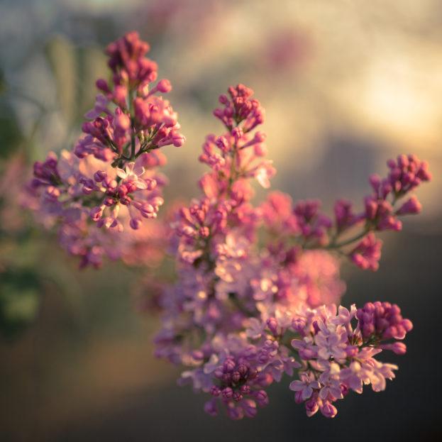 Iphone 7 Hd Wallpapers 1080p صور أجمل زهور ورد خلفيات موبايل ولابتوب تحميل مجاني صور
