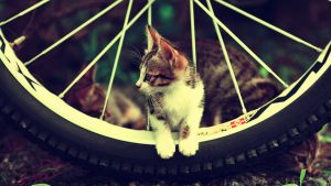 Cute-cat-cycle-Wallpapers-For-Girls