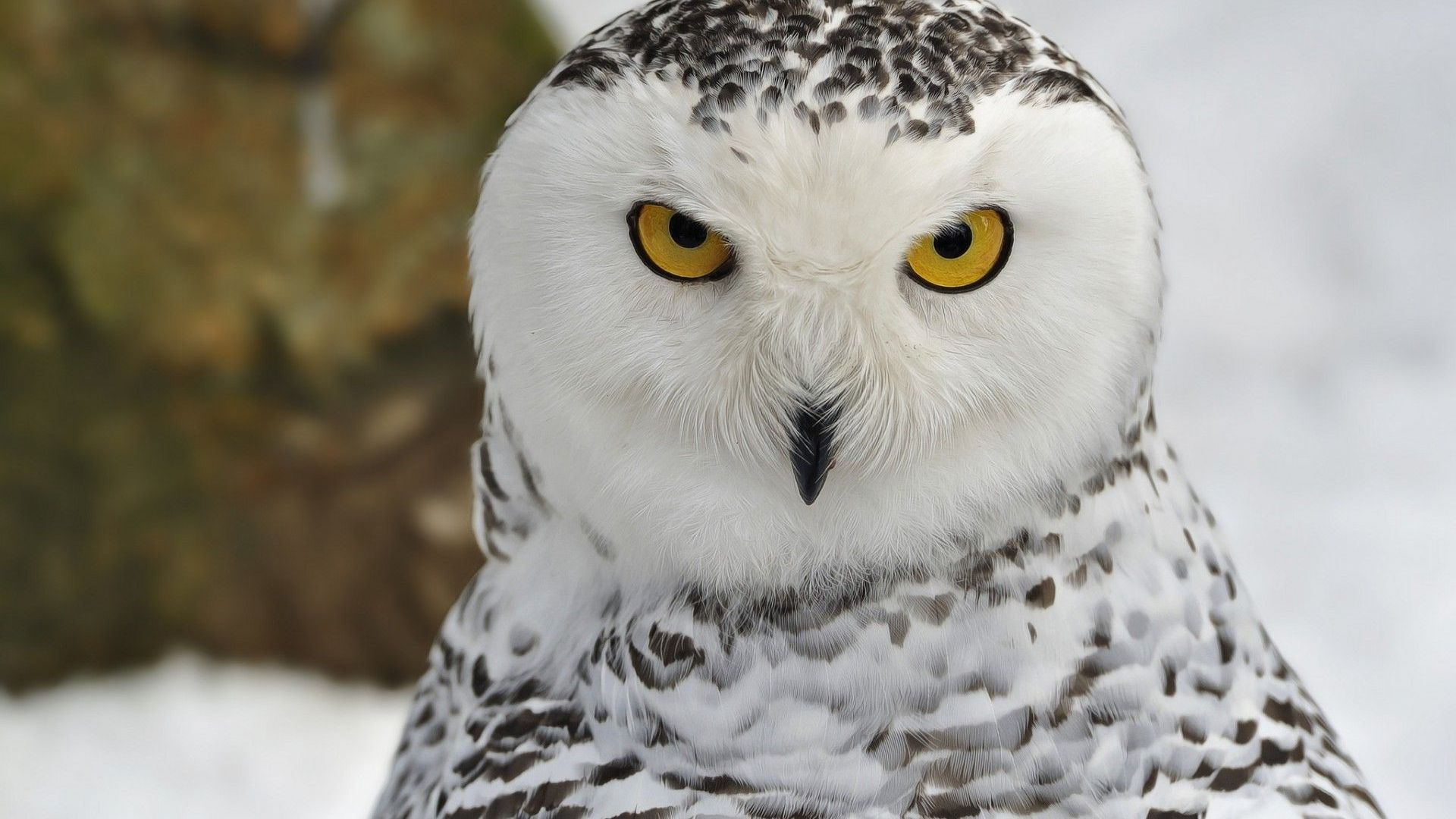 Cute Downloadable Wallpapers Owl Wallpapers Amp Pictures Hd Wallpapers