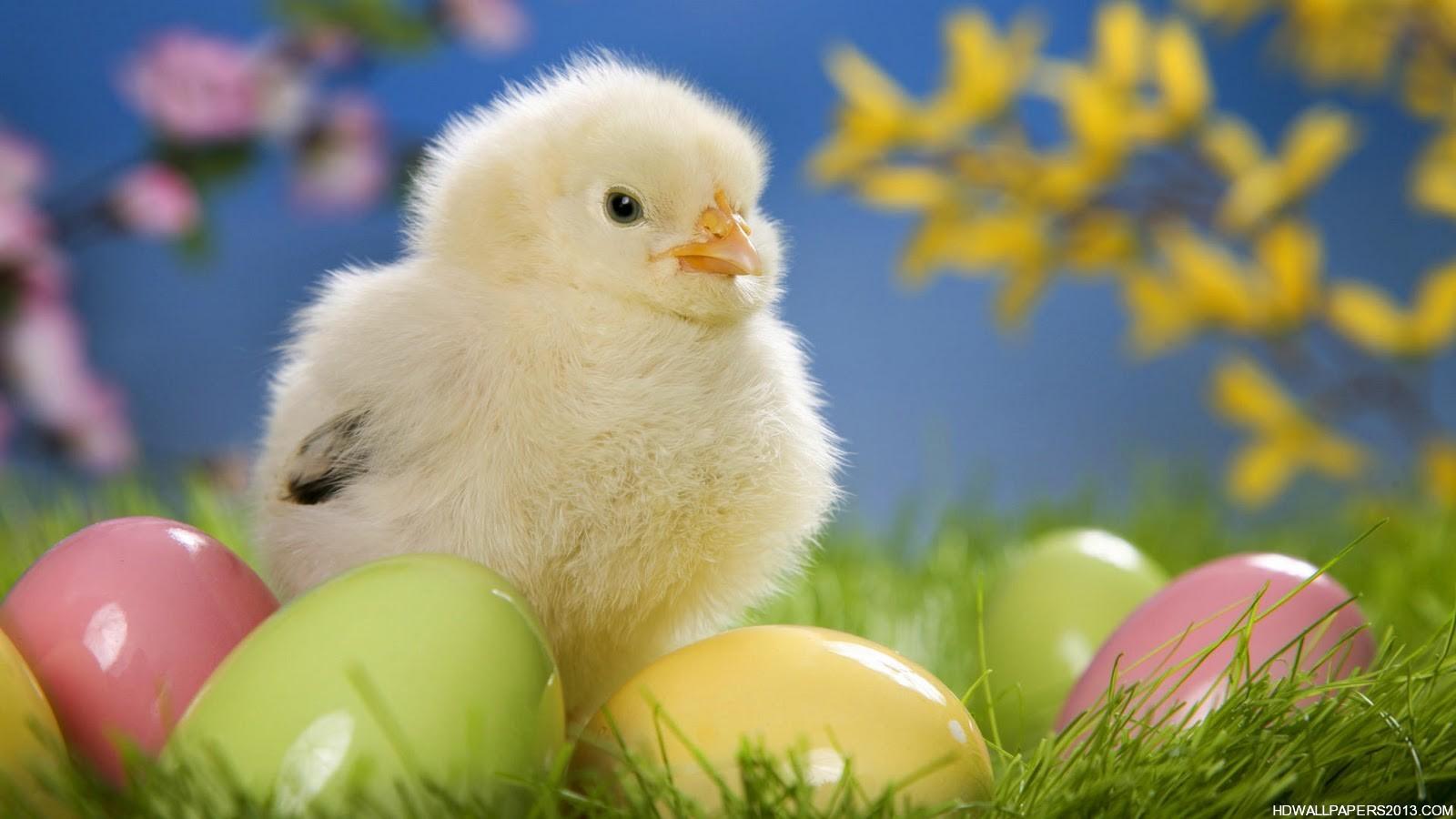 Free Easter Desktop Backgrounds Animal