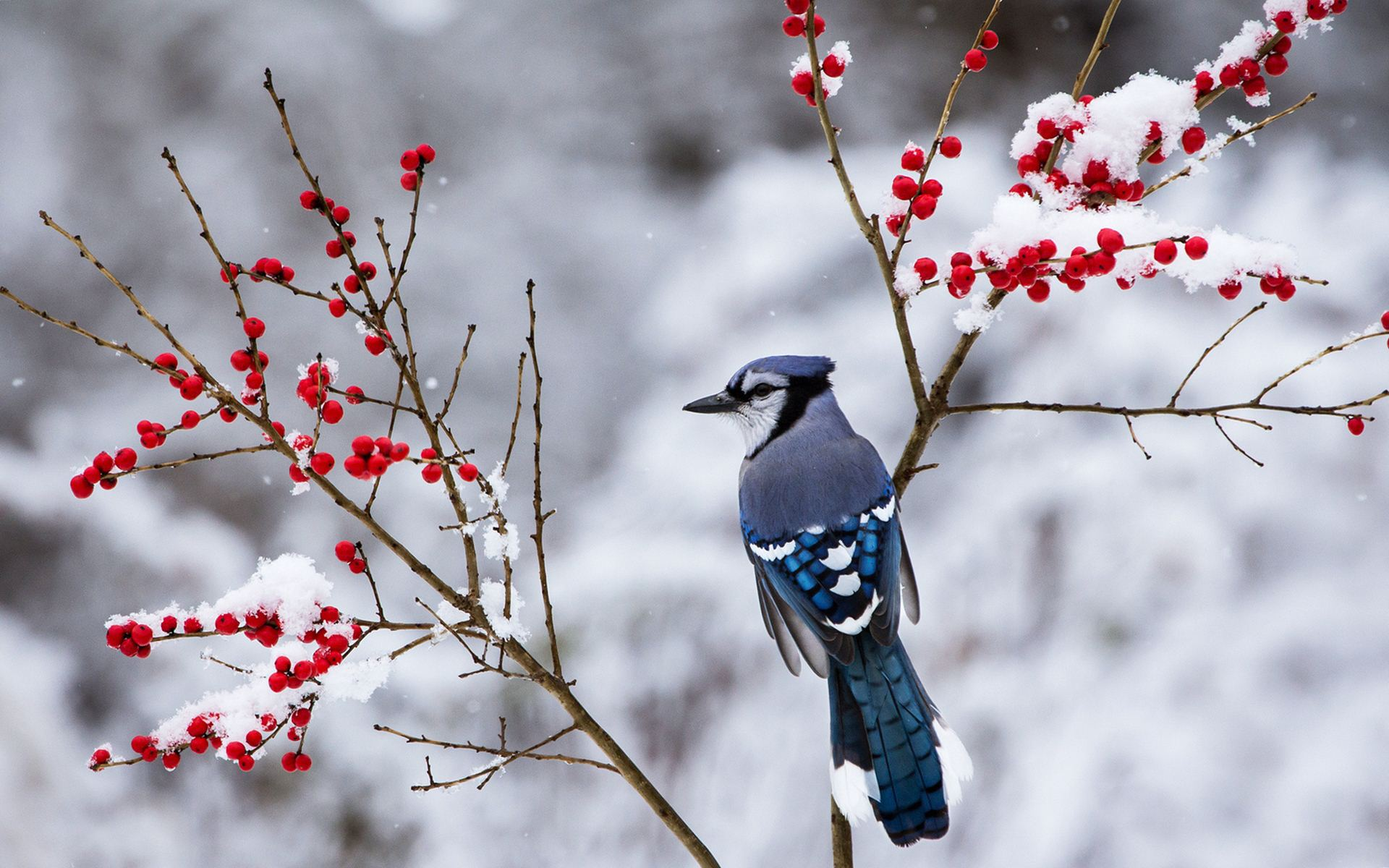 Live 3d Wallpaper Snowing Beautiful Snow Bird Wallpaper 38533 1920x1200px