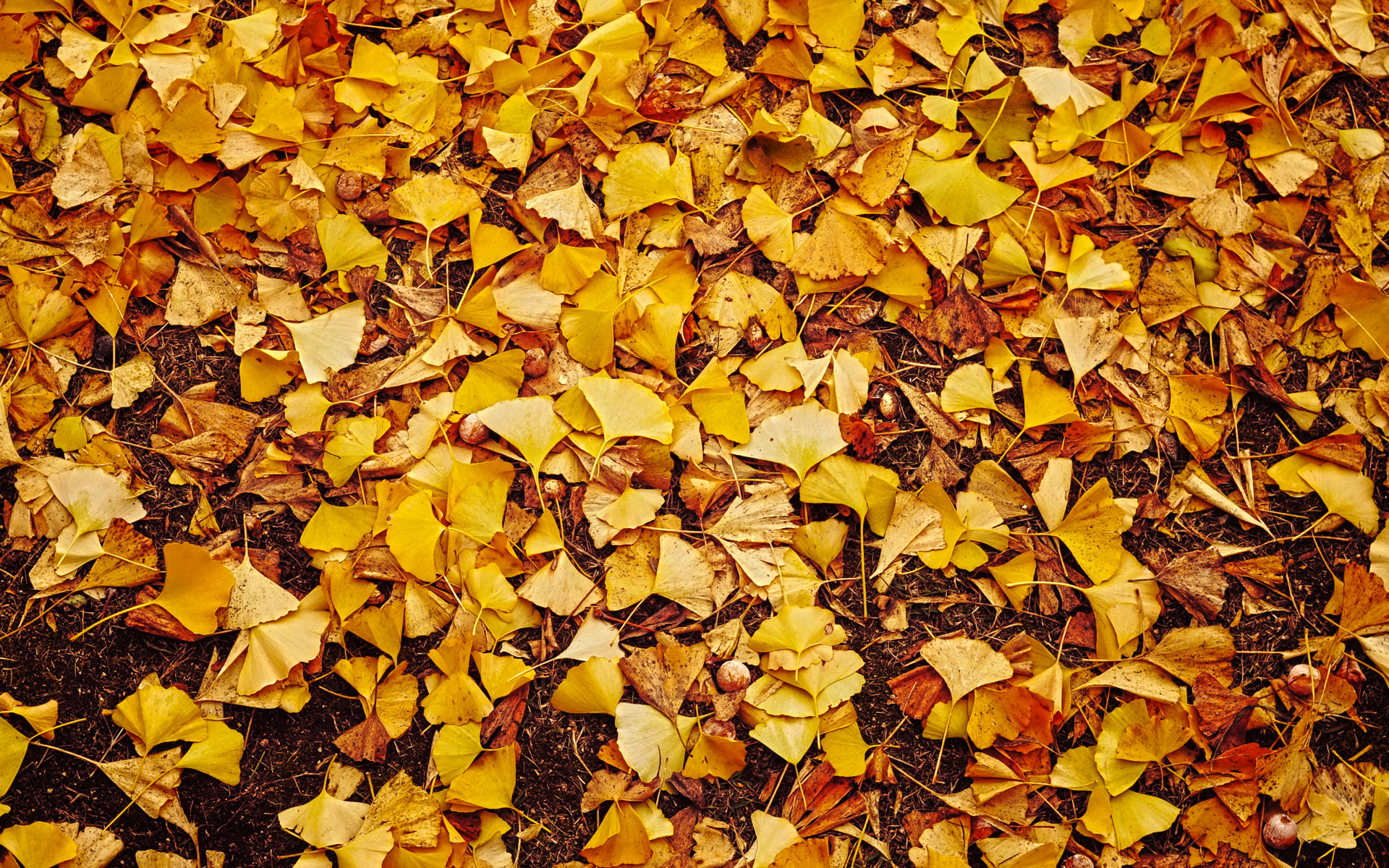 Falling Leaves Live Wallpaper Autumn Leaves Wallpaper 33086 1920x1200 Px Hdwallsource Com