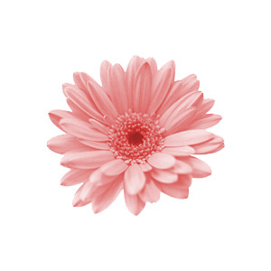 Cute 3d Cartoon Wallpapers Wallpaper Of Pink Flower 3045 Hdwpro