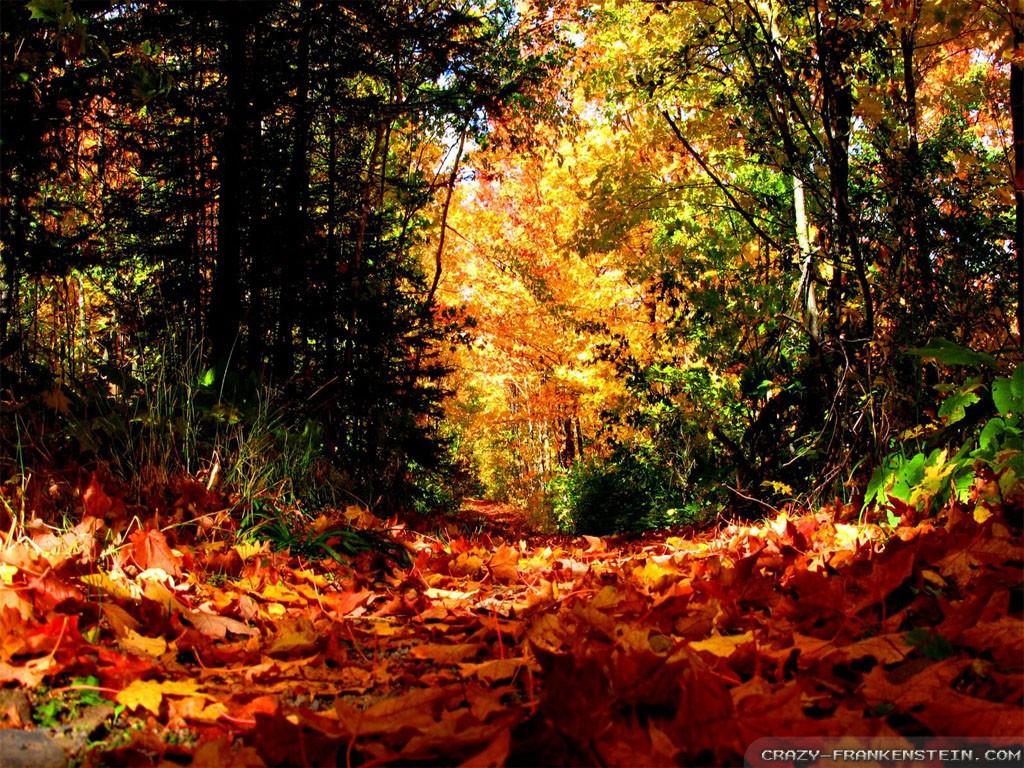 Golf Course Fall Season Wallpaper Pc Autumn Season Wallpapers 3925 Hdwpro
