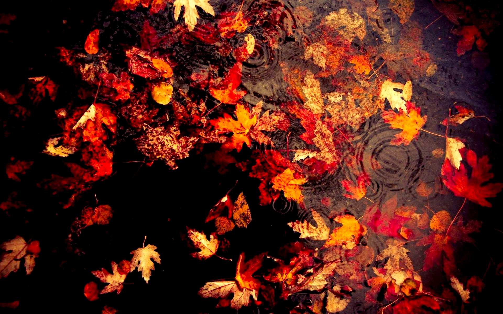 Images Of Nature Wallpaper With Quotes Autumn Leaves Picture 4760 Hdwpro