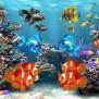 Fish-Wallpapers-1080p-HD-624x468 4k Aquarium Video As Desktop Wallpaper