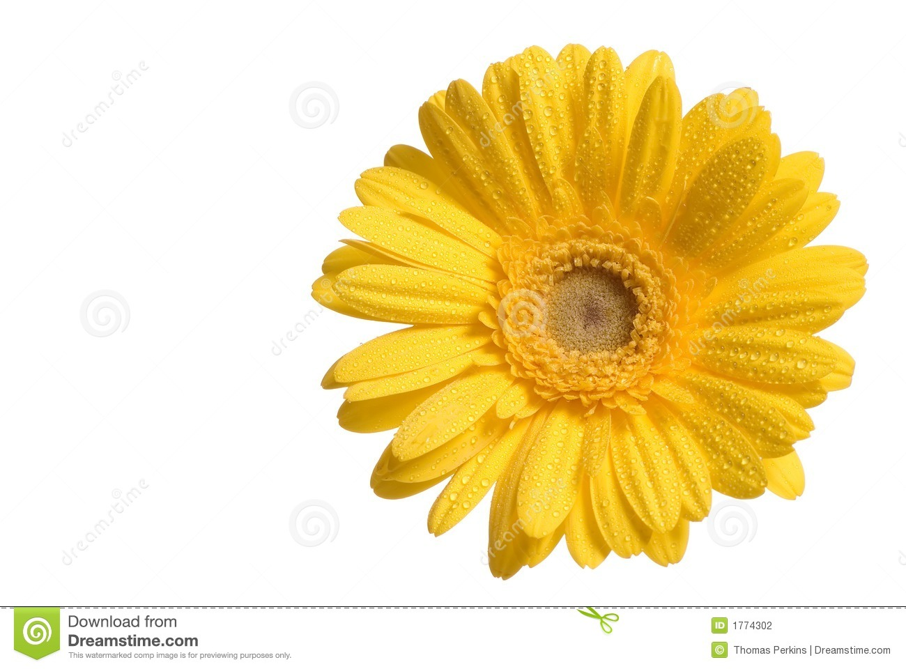Islamic Quotes And Wallpapers Yellow Flower Photo 9295 Hdwpro