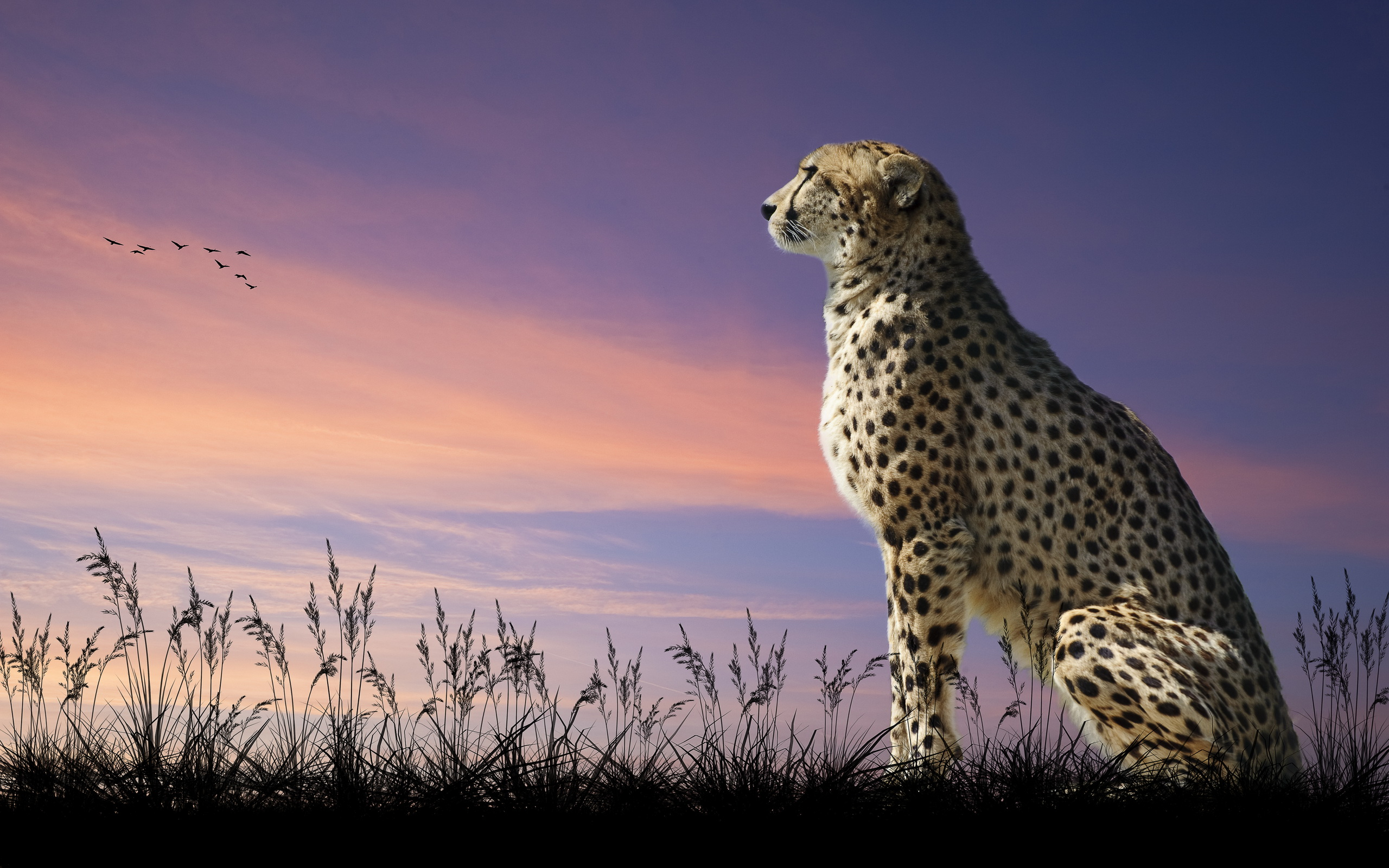Wallpaper Coca Cola 3d Widescreen Cheetah Backgrounds 11874 Hdwpro