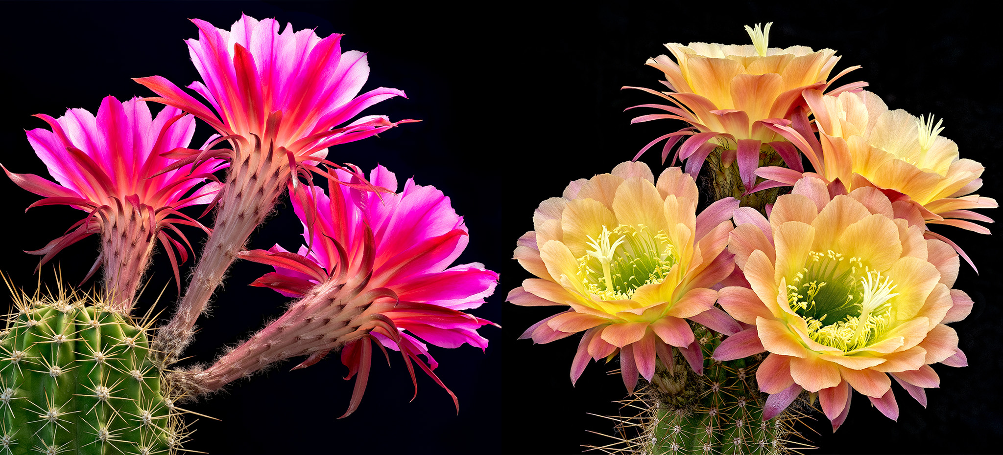 Yellow Wallpapers With Quotes Cactus Flower Image 13747 Hdwpro