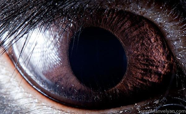 black-rabbit-close-up-of-eye-macro-suren-manvelyan