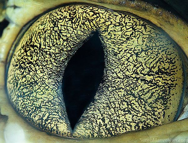 cainman-close-up-of-eye-macro-suren-manvelyan