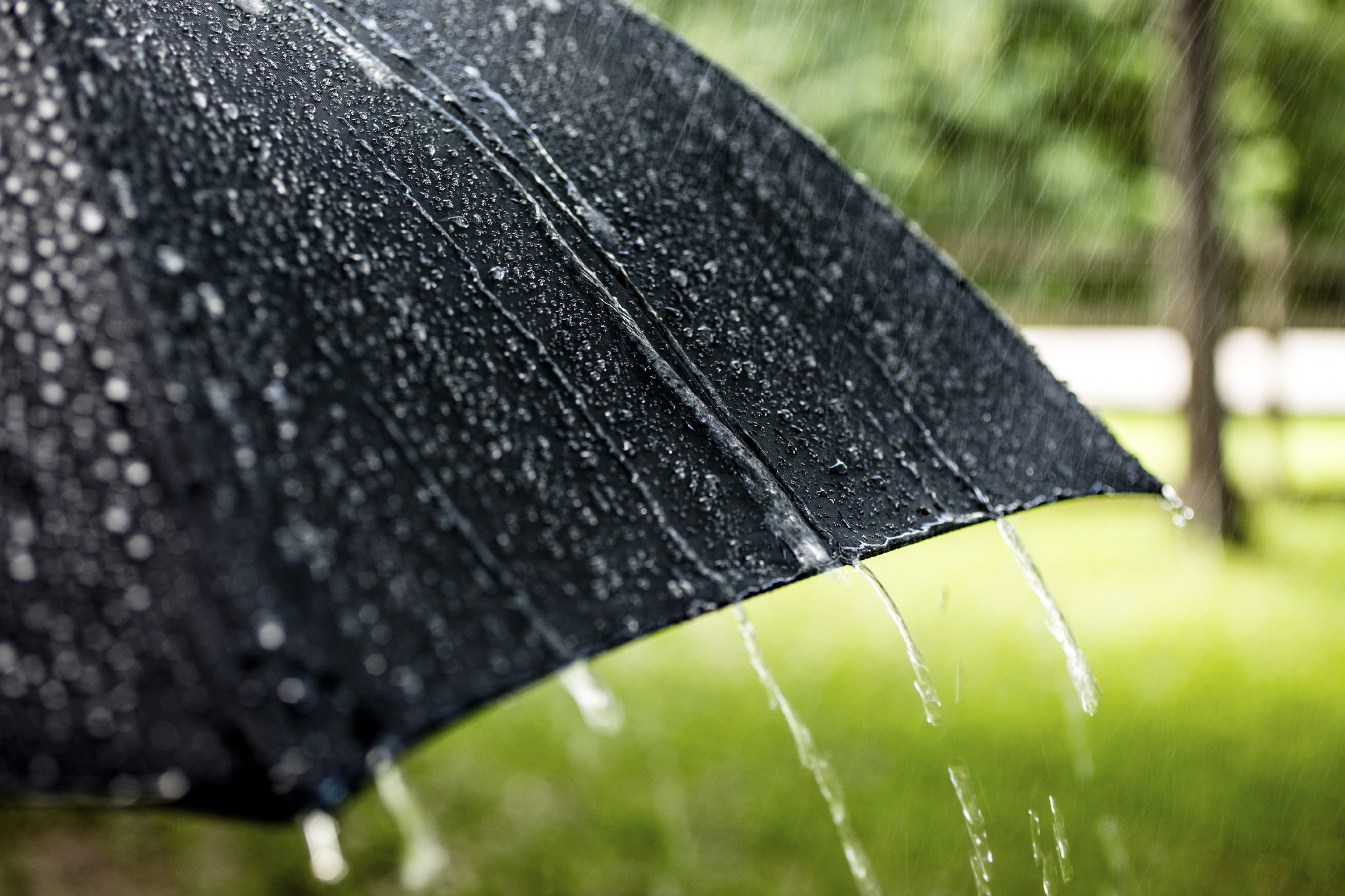 Cute Rainy Weather Wallpapers Can Your Joints Predict The Weather Health Essentials