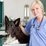 Veterinary Assistant Salary