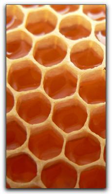Honey Natural Remedy For Kids Coughs In Punta Gorda