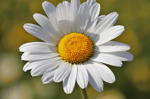 , Herbal remedies from your garden