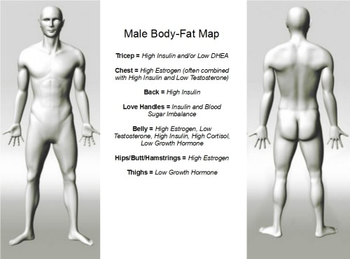body fat map male Hormones, Problem Areas and Your Body Fat Map   Part 2