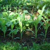 Earthworms Very Effectively Protect Garden Plants From Invasive Slugs, Research Finds