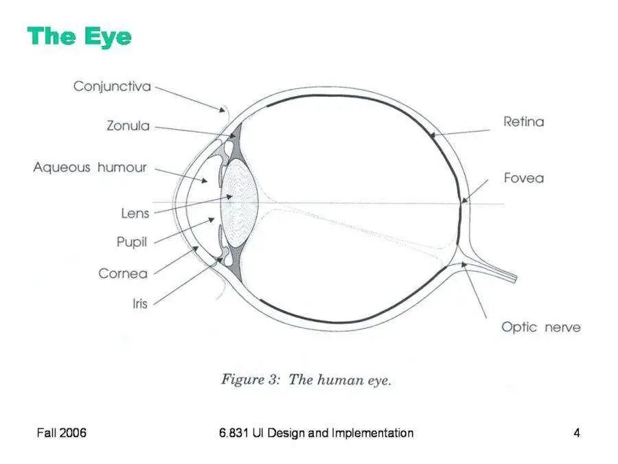 eye anatomy diagram