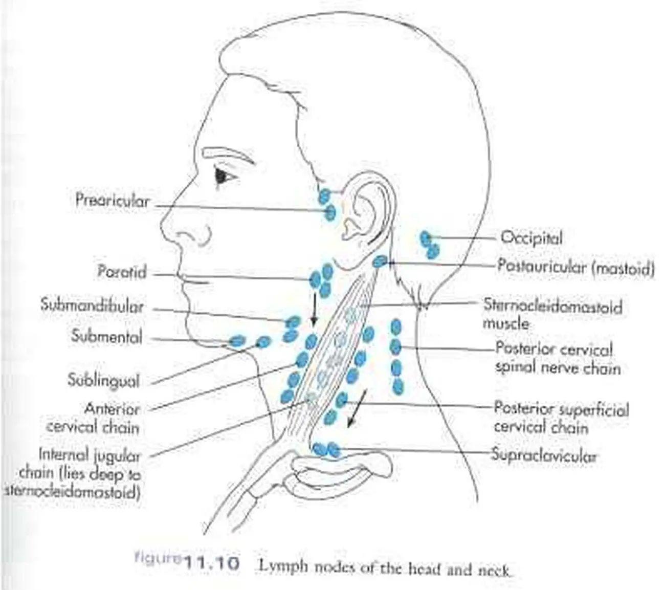 under chin diagram