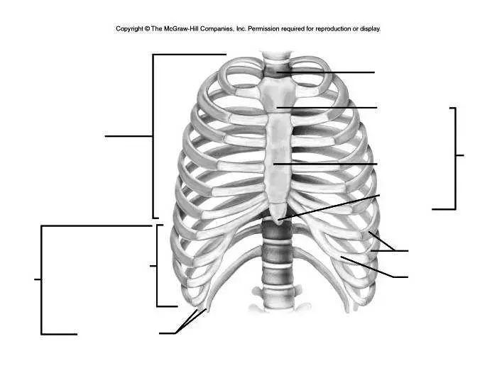 body cavities diagram labeled