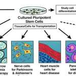 An Overview on Blood Cord Stem Cells