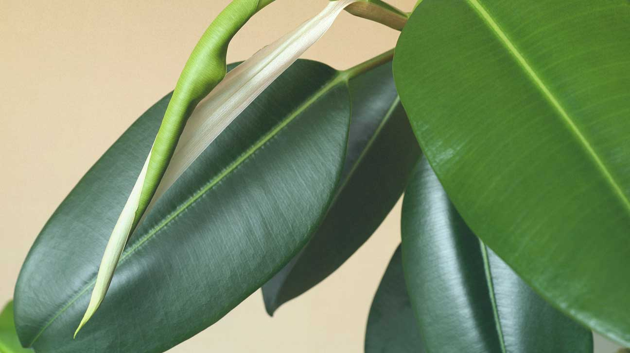 Indoor Plants For The Office The Best Air Purifying Plants