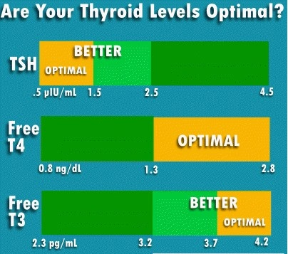 Thyroid Hormone Synthesis Functions Levels Effects Diseases